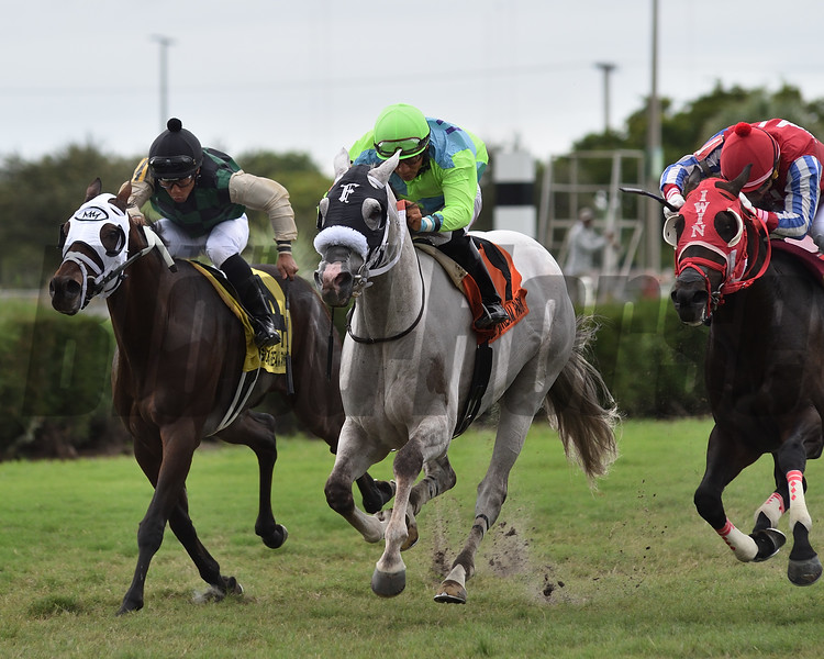 Galleon Mast wins the 2019 Millions Turf Preview Stakes at Gulfstream Park West<br /> Coglianese Photos/Ryan Thompson