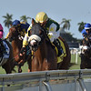 Cheermeister wins the 2019 Wait a While Stakes at Gulfstream Park<br /> Coglianese Photos/Derbe Glass