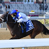 Spiced Perfection wins the 2019 Go for Wand Handicap at Aqueduct<br /> Coglianese Photos/Joe Labozzetta