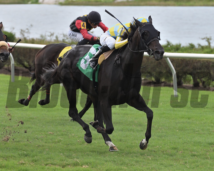 Beautiful Ballad wins an allowance optional claiming race at Gulfstream Park West Saturday, October 12, 2019. Photo: Coglianese Photos/Ryan Thompson