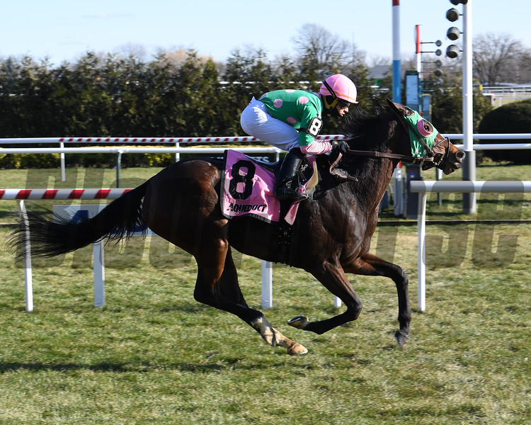 Saratoga Treasure wins the 2019 Autumn Days Stakes at Aqueduct<br /> Coglianese Photos/Susie Raisher