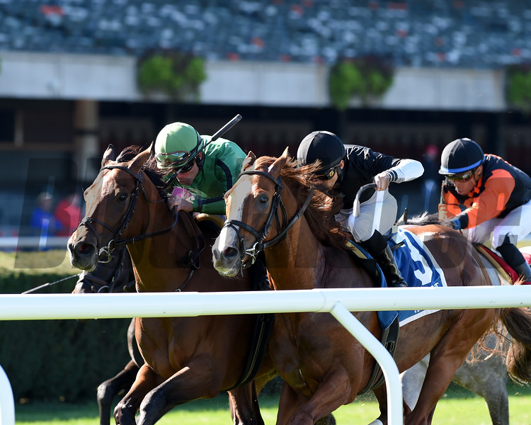 Gucci Factor wins the 2019 Mohawk Stakes at Belmont Park<br /> Coglianese Photos/Chelsea Durand