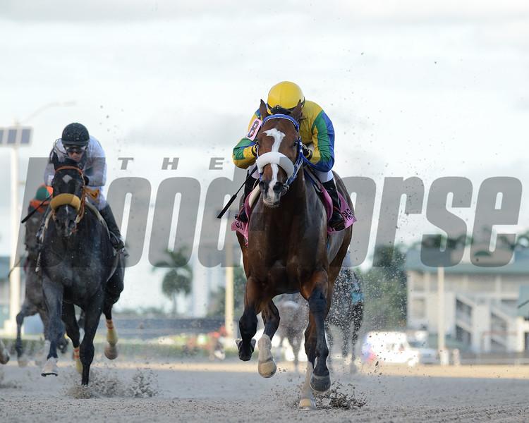 Sacamandu wins the 2019 Copa Velocidad del Caribe Stakes at Gulfstream Park<br /> Coglianese Photos