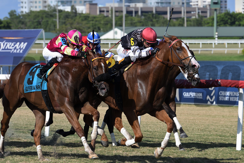Marshall Eddy wins the 2019 Mr. Steele Stakes at Gulfstream Park<br /> Coglianese Photos/Ryan Thompson