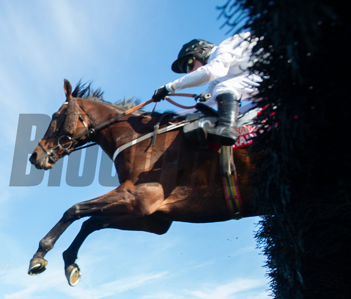 Jockey Nico De Boinvillle rises Brain Power to the win in  the Grand National G1 at Far Hills Race Meeting in Far Hills, N.J. October 19, 2019. Photo by Skip Dickstein/Tim Lanahan.