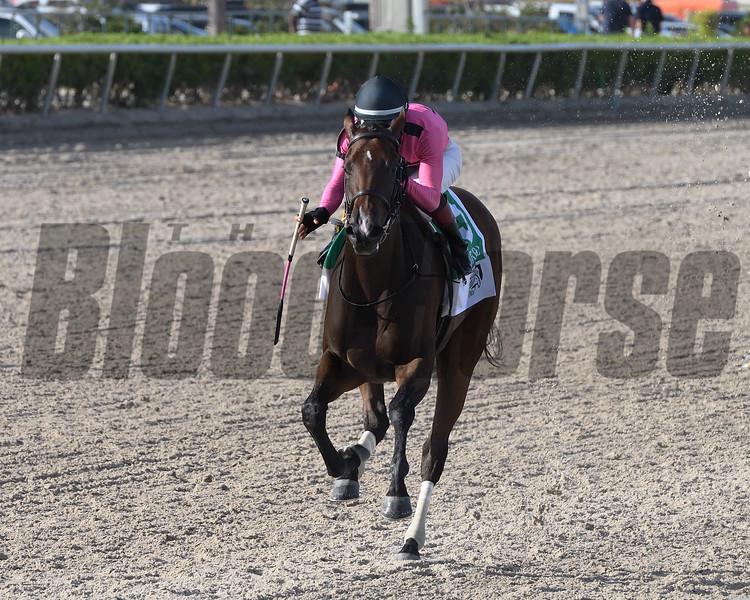 Two Sixty wins the 2019 FTBOA Florida Sire My Dear Girl Stakes at Gulfstream Park<br /> Coglianese Photos/Ryan Thompson