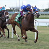 Speed Star - ALW, Gulfstream Park, September 15, 2019<br /> Coglianese Photos/Ryan Thompson