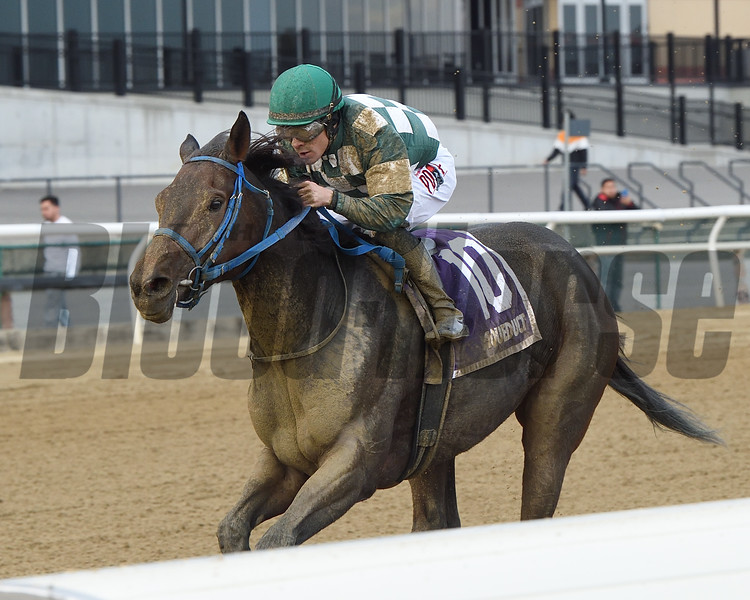 Our Super Nova wins the 2019 New York Stallion Series Stakes at Aqueduct. Photo: Coglianese Photos/Elsa Lorieul