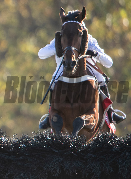 Brain Power with jockeyNico De Boinvillle jumps the final fence on his way to the win in the Grand National G1 at Far Hills Race Meeting in Far Hills, N.J. October 19, 2019. Photo by Will Hauser(Skip Dickstein Photography)