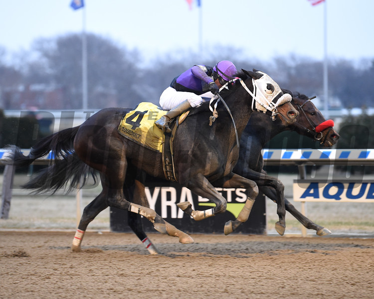 Mrs. Orb wins the Bay Ridge Stakes Sunday, December 29, 2019 at Aqueduct. Photo: Coglianese Photos/Chelsea Durand
