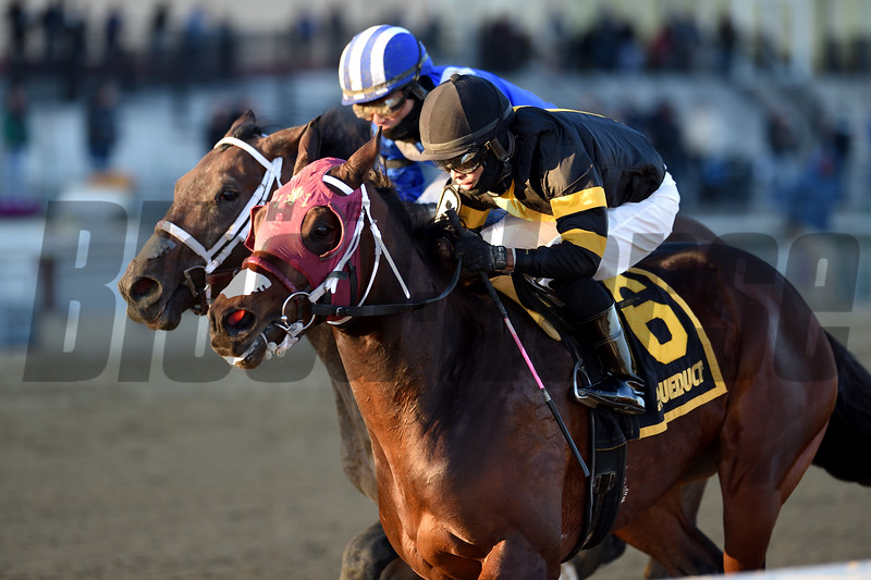 Shotski wins the 2019 Remsen Stakes at Aqueduct<br /> Coglianese Photos/Chelsea Durand