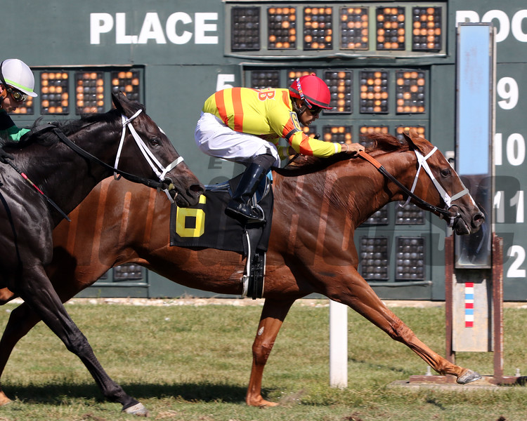 Pumpkin Rumble with Luis Saez win the Alphabet Soup Handicap at Parx on September 21, 2019. Photo By: Chad B. Harmon
