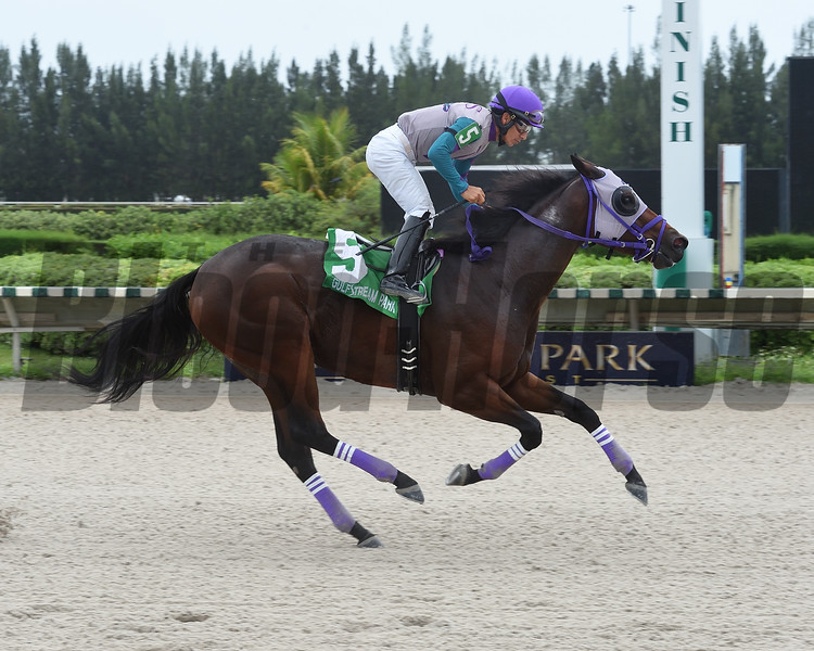 Travy Boy wins the 2019 Millions Sprint Preview Stakes at Gulfstream Park West<br /> Coglianese Photos/Lauren King