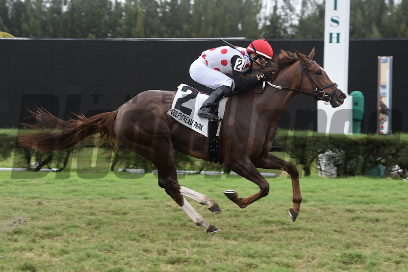 American Giant wins the 2019 Juvenile Fillies Turf Stakes at Gulfstream Park West<br /> Coglianese Photos/Lauren King