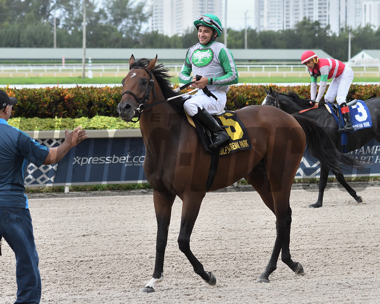 Scraps wins the 2019 Bear's Den Stakes at Gulfstream Park<br /> Coglianese Photos/Ryan Thompson
