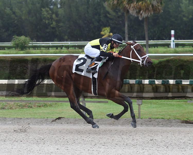J P's Delight wins an allowance race October 11, 2019 at Gulfstream Park West. Photo: Coglianese Photos/Lauren King