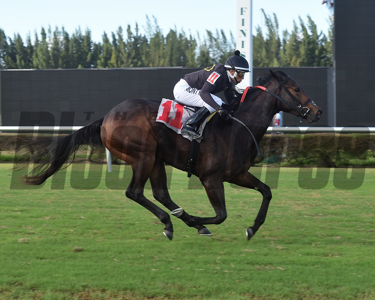 Free the Beast wins a maiden claiming race October 3, 2019 at Gulfstream Park West. Photo: Coglianese Photos/Lauren King