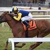 Sadler's Joy wins the 2019 Red Smith Stakes at Aqueduct<br /> Coglianese Photos/Joe Labozzetta