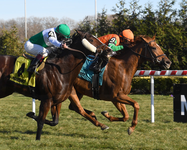 Andina Del Sur wins the 2019 Forever Together Stakes at Aqueduct<br /> Coglianese Photos