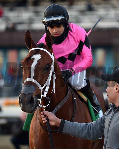 Maximum Security wins the 2019 Cigar Mile at Aqueduct<br /> Coglianese Photos/Elsa Lorieul
