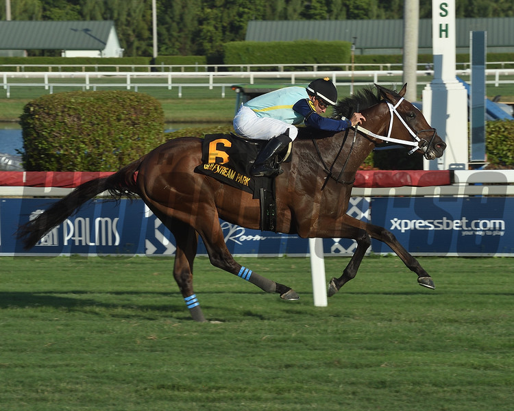 Sole Volante wins the 2019 Pulpit Stakes<br /> Coglianese Photos/Lauren King