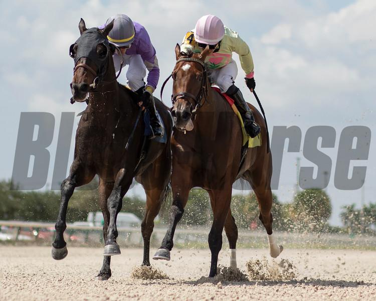 Beasaichi - Maiden Win, Gulfstream Park West, October 17, 2019<br /> Coglianese Photos/Ryan Thompson