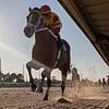 Bodexpress wins an allowance race Wednesday, November 20, 2019 at Gulfstream Park West. Photo: Coglianese Photos/Ryan Thompson