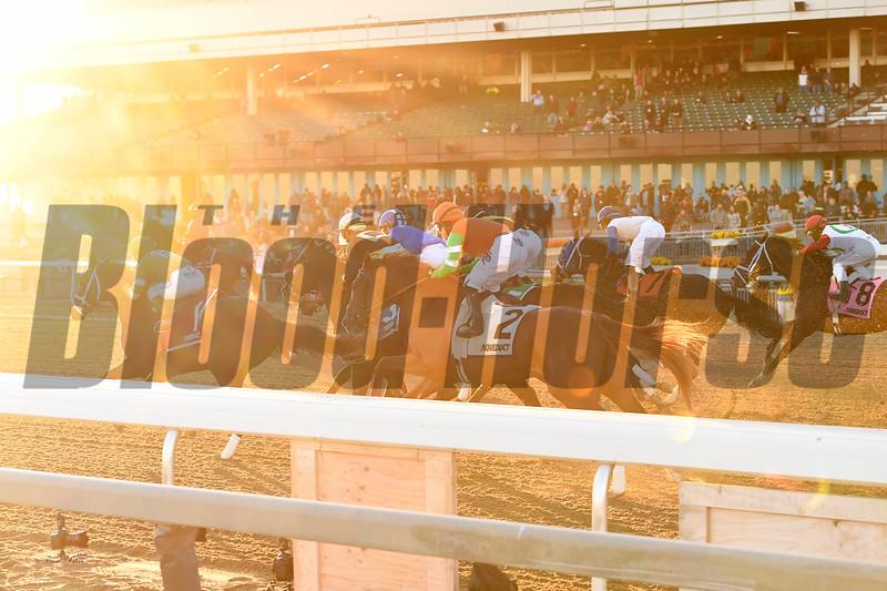 Shotski wins the 2019 Remsen Stakes at Aqueduct<br /> Coglianese Photos/Joe Labozzetta