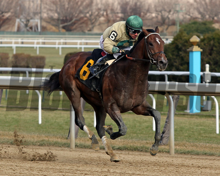 Moon Over Miami with Junior Alvarado win a Maiden race at Aqueduct on December 7, 2019. Photo By: Chad B. Harmon