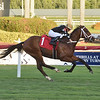 Carom - AOC, Gulfstream Park, December 1, 2019<br /> Coglianese Photos/Lauren King