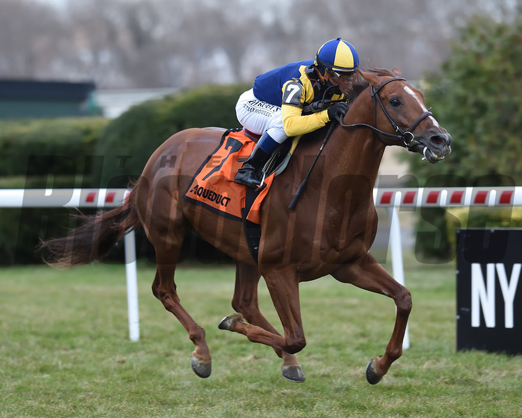 Sadler's Joy wins the 2019 Red Smith Stakes at Aqueduct<br /> Coglianese Photos