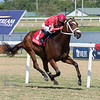 Cajun Casanova wins the 2019 Hollywood Beach Stakes at Gulfstream Park<br /> Coglianese Photos/Ryan Thompson