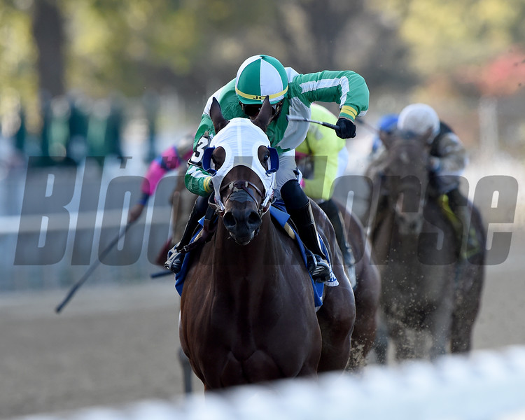 Pauseforthecause wins the 2019 Iroquois Stakes at Belmont Park<br /> Coglianese Photos/Elsa Lorieul