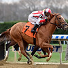 Network Effect - ALW, Aqueduct, November 10, 2019<br /> Coglianese Photos/Susie Raisher