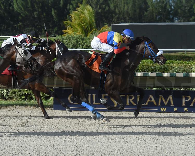 Venezuelan Heart wins a maiden claiming race Sunday, October 13, 2019 at Gulfstream Park West. Photo: Coglianese Photos/Lauren King