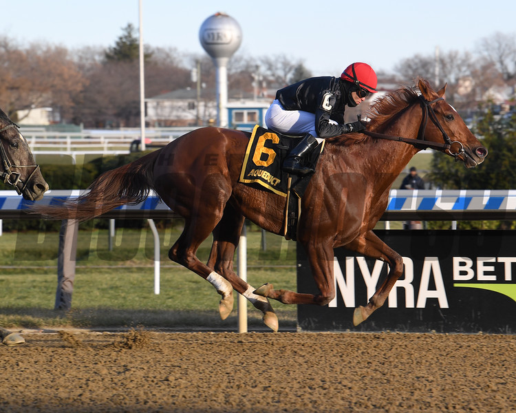 Performer wins the 2019 Discovery at Aqueduct<br /> Coglianese Photos/Susie Raisher