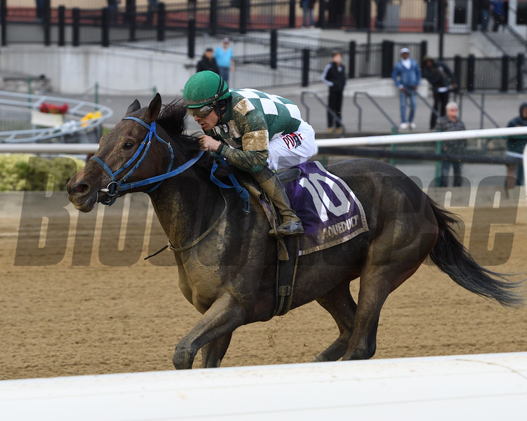 Our Super Nova wins the 2019 New York Stallion Series Stakes at Aqueduct. Photo: Coglianese Photos/Joe Labozzetta