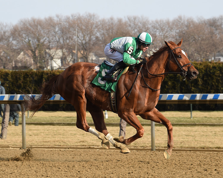 Mr. Buff wins the 2019 Alex M. Robb Stakes at Aqueduct. Photo: Coglianese Photos/Chelsea Durand