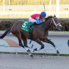 Leitone wins the 2019 Claiming Crown Jewel at Gulfstream Park<br /> Coglianese Photos/Andie Biancone