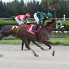 Red Crescent wins the 2019 Millions Classic Preview Stakes at Gulfstream Park West<br /> Coglianese Photos/Lauren King