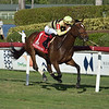 Mitchell Road wins the 2019 My Charmer Stakes at Gulfstream Park<br /> Coglianese Photos