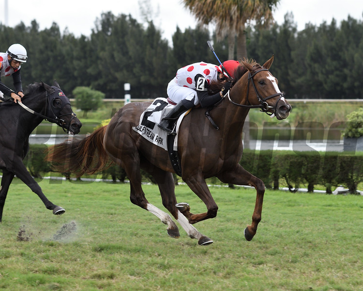 American Giant wins the 2019 Juvenile Fillies Turf Stakes at Gulfstream Park West<br /> Coglianese Photos