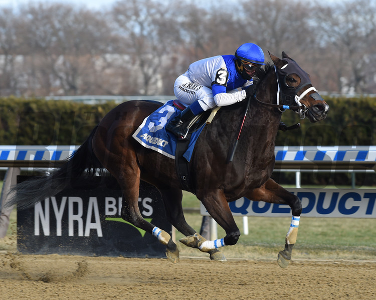 Spiced Perfection wins the 2019 Go for Wand Handicap at Aqueduct<br /> Coglianese Photos