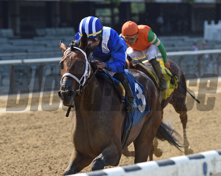 Ajaaweed - Maiden Win, Belmont Park, September 11, 2019<br /> Coglianese Photos/Chelsea Durand