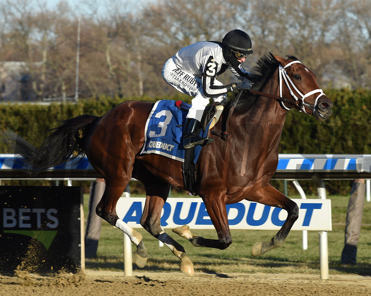 Bellera wins the 2019 Comely Stakes at Aqueduct<br /> Coglianese Photos/Chelsea Durand