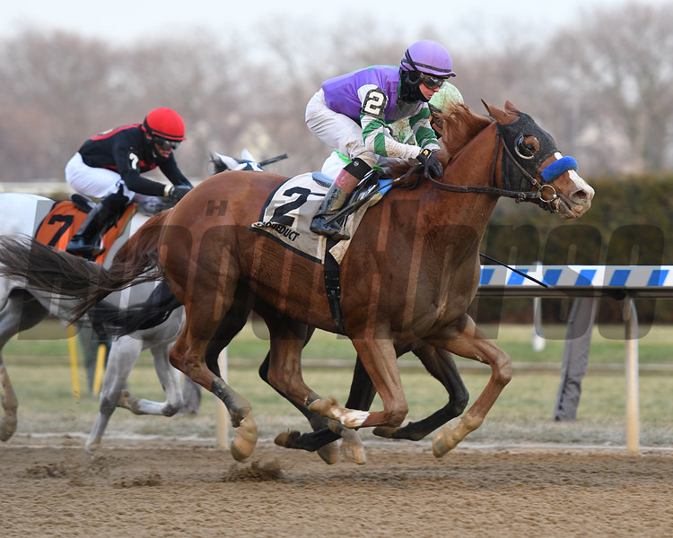 Stan the Man wins 2019 Queen's County Stakes at Aqueduct. Photo: Coglianese Photos/Annette Jasko
