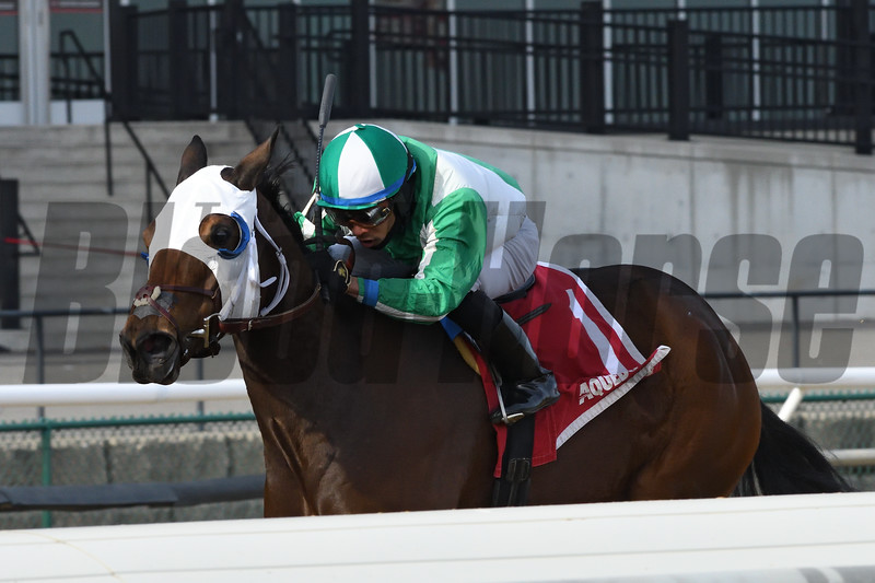 Pauseforthecause wins the 2019 Garland of Roses Stakes at Aqueduct<br /> Coglianese Photos/Elsa Lorieul