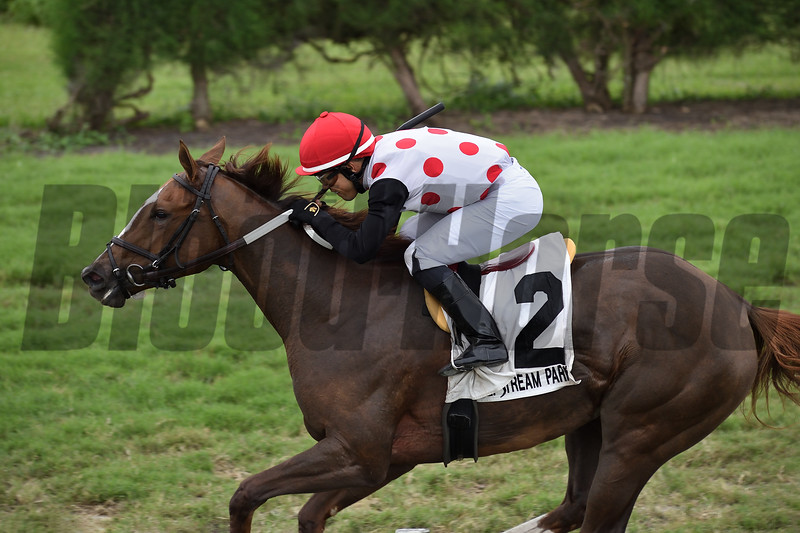 American Giant wins the 2019 Juvenile Fillies Turf Stakes at Gulfstream Park West    <br /> Coglianese Photos/Ryan Thompson