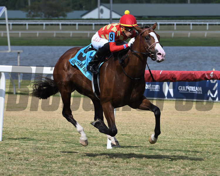 Graceful Kitten wins the 2019 Armed Forces Stakes at Gulfstream Park<br /> Coglianese Photos/Ryan Thompson