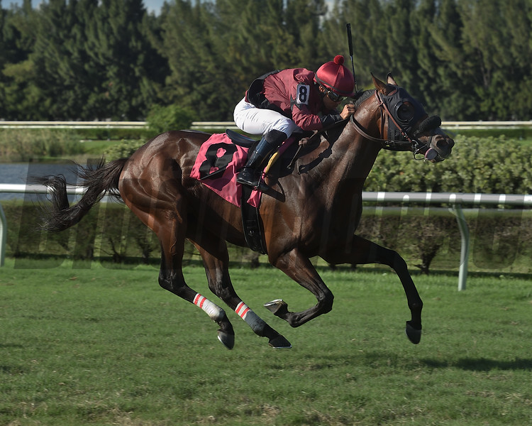 Max K. O. - AOC, Gulfstream Park West, October 31, 2019<br /> Coglianese Photos/Lauren King